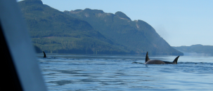 Inside Passage Trip Report